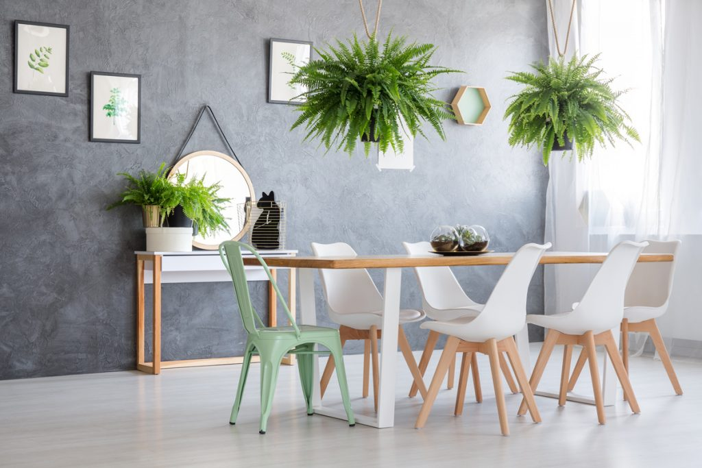 interierove rastliny