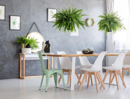 Výsledok vyhľadávania obrázkov pre dopyt rastliny v interiéri