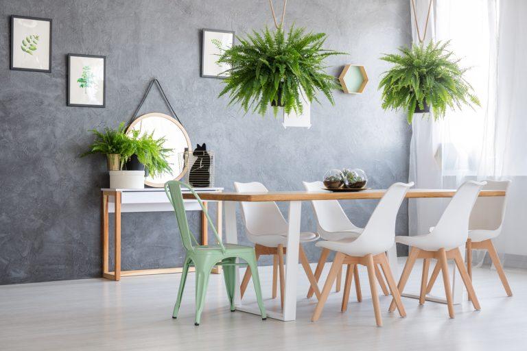 Inšpirácia: Rastliny v interiéri štýlovo