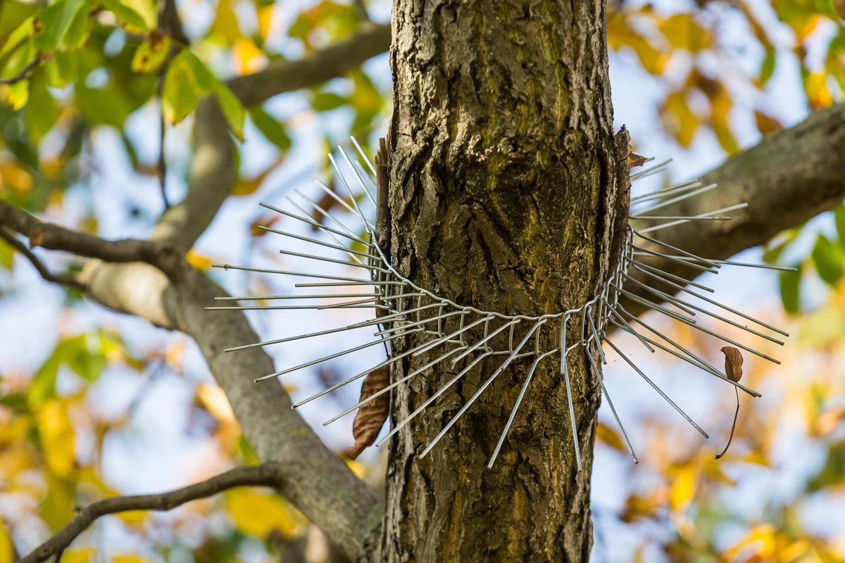 Zábrana na strom