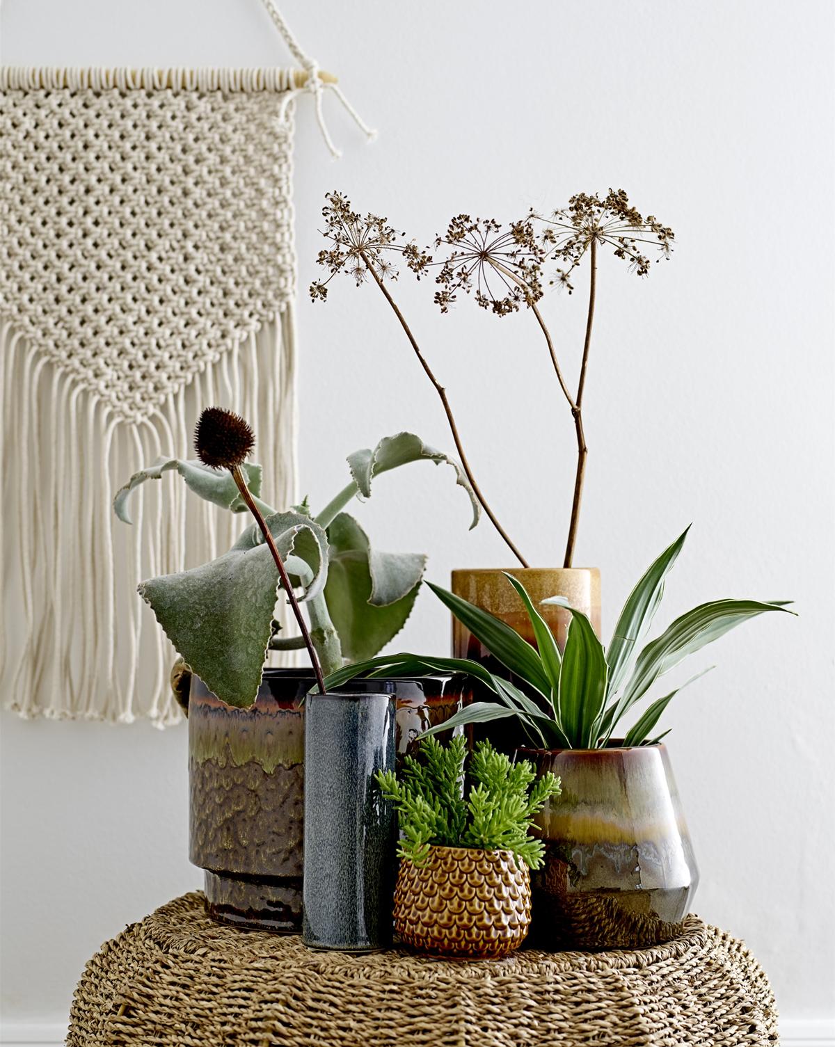 rastliny v interieri