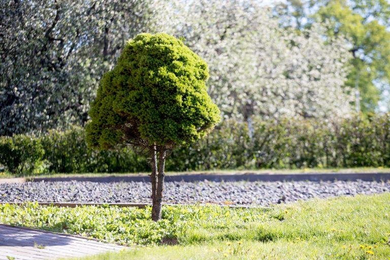 Oživenie záhrady solitérmi