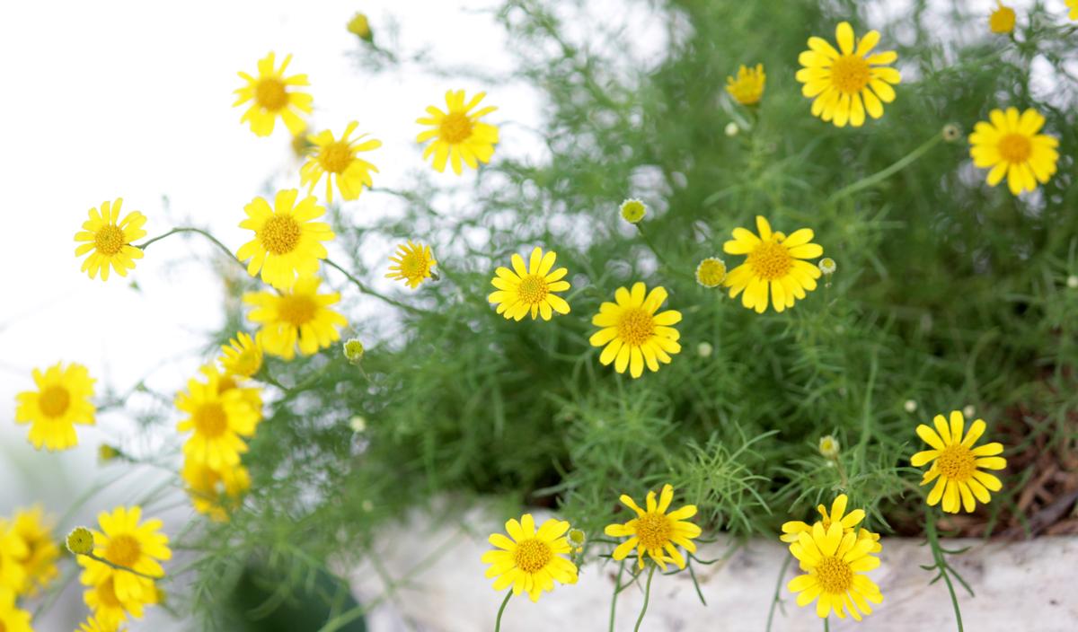 kvety vhodné na slnko