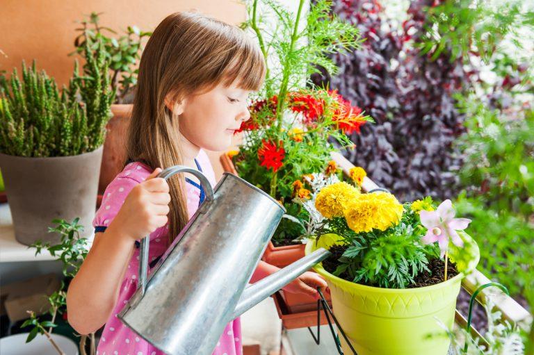 12 rastlín na slnečný balkón