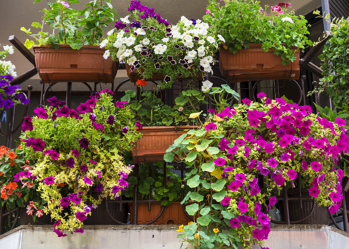 rastliny na balkón