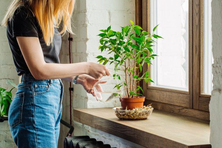 6 tipov, aby kvety počas dovolenky prežili bez ujmy