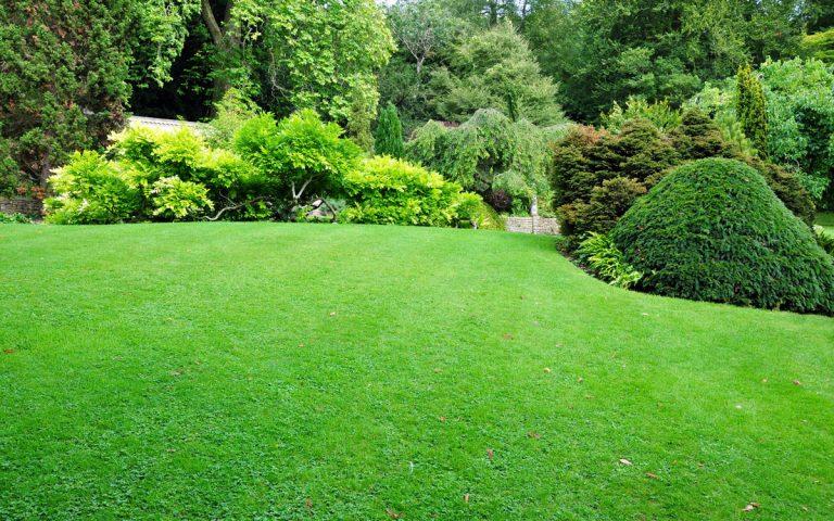 Ako zabrániť vysychaniu trávnika?