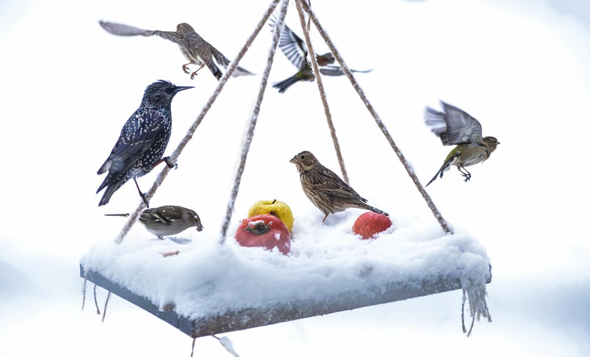 kŕmenie zvierat v zime