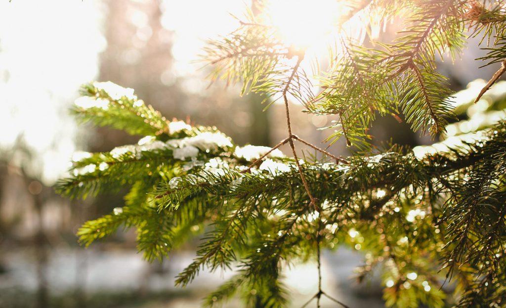 Viete, ktoré dreviny vám skrášlia záhradu aj v zime?