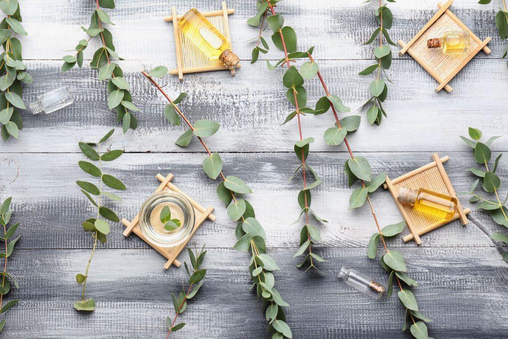 Čo ste možno nevedeli o eukalypte