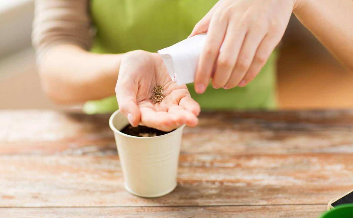 vysievanie semien