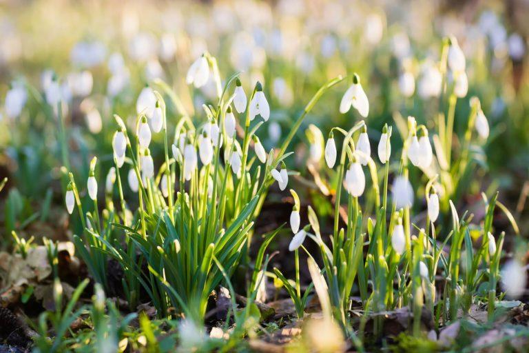 Február je za rohom, čomu sa v okrasnej záhrade venovať