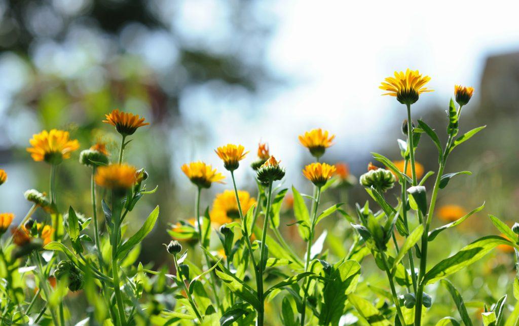 V marci pripravte záhradu na nastávajúcu sezónu