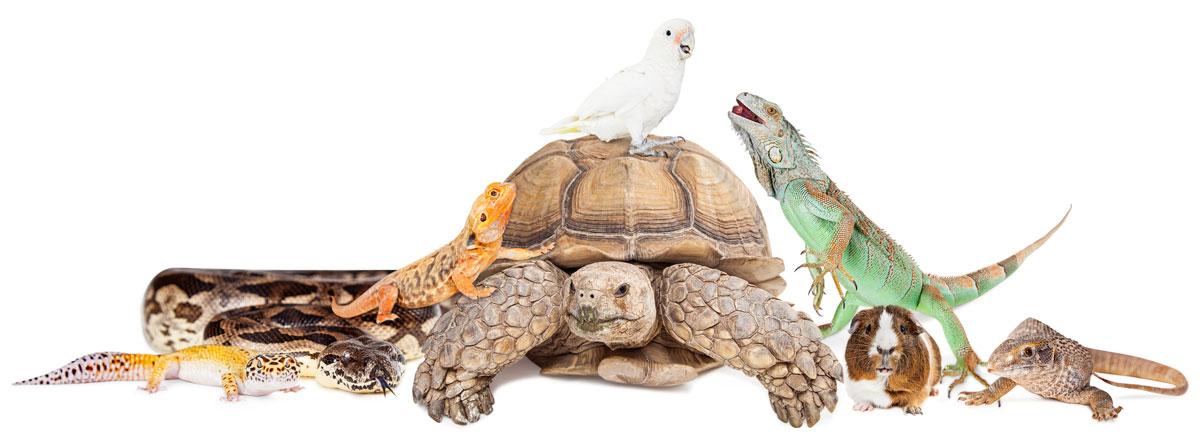 zvierata v interieri