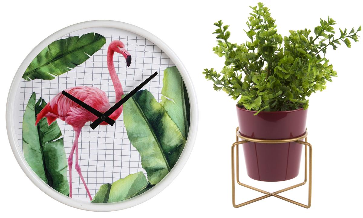 Bonami, Pokojovky, trendy v pestovaní