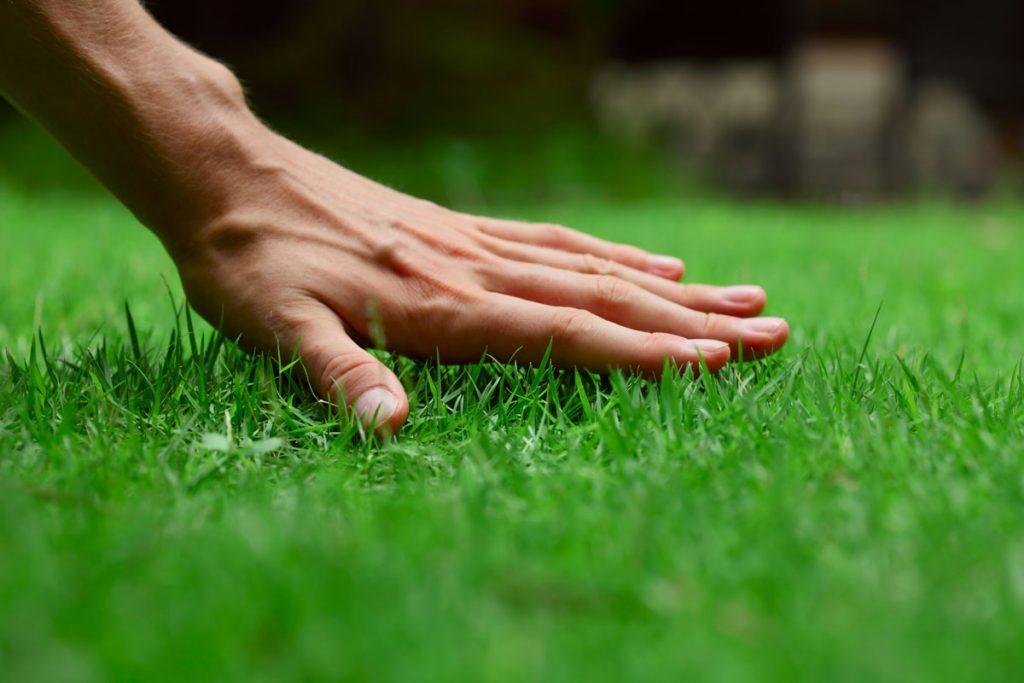 založenie trávnika