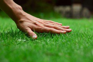 Zakladáme trávnik: 6 rád ako dosiahnuť dokonalý zelený koberec