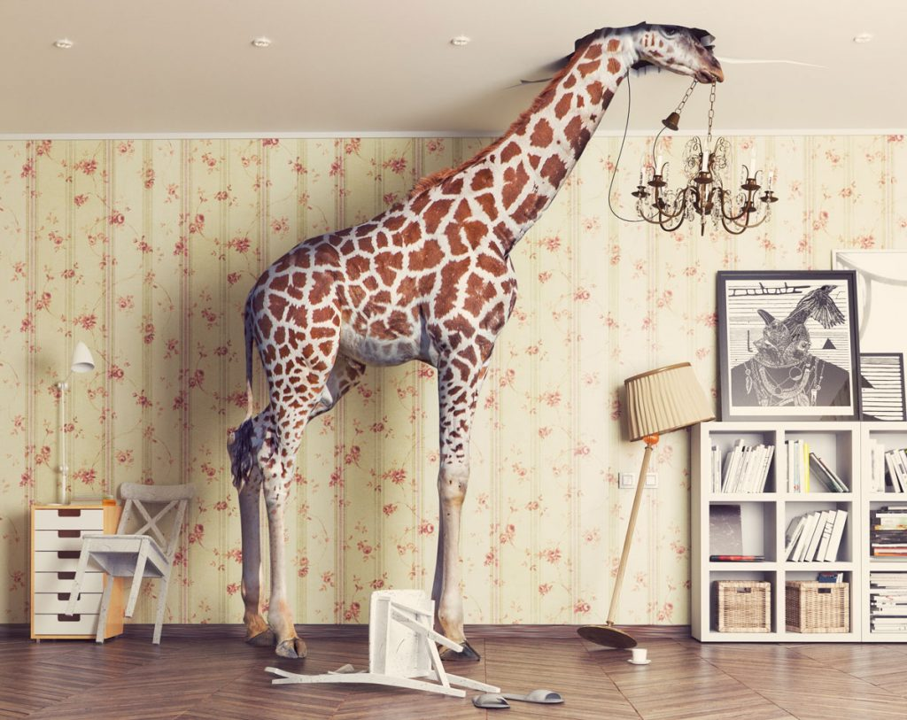 žirafa v miestnosti