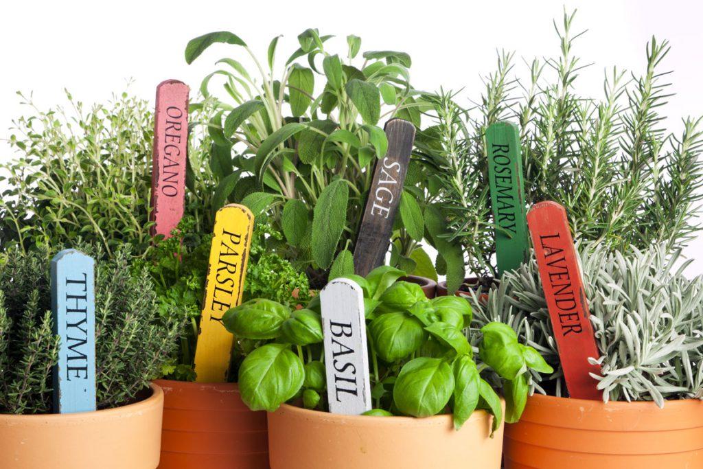 rôzne druhy byliniek v kvetináčoch