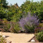 záhradný chodníček z betónovej dlažby lemuje levanduľa a iné trvalky