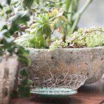 hlinené kvetináče so sukulentmi