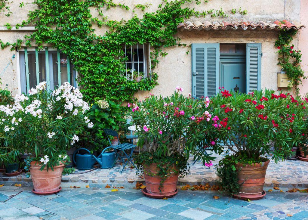 ružové a červené oleandre v kvetináčoch na terase
