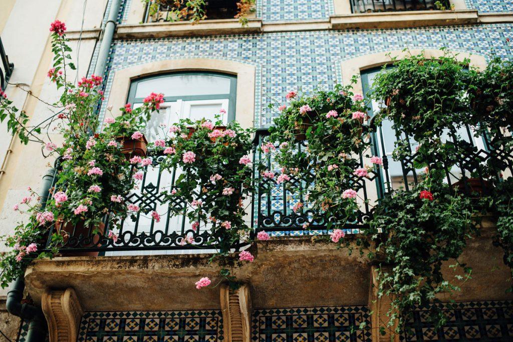 popínavé ružové ruže na balkóne