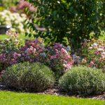 záhradný záhon vysadený dlho kvitnúcimi, nenáročnými pôdopokryvnými ružami alevanduľou