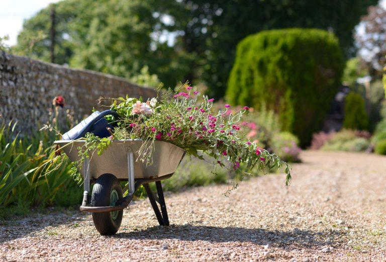 V okrasnej záhrade to žije aj počas augusta. Doprajte jej preto potrebnú starostlivosť