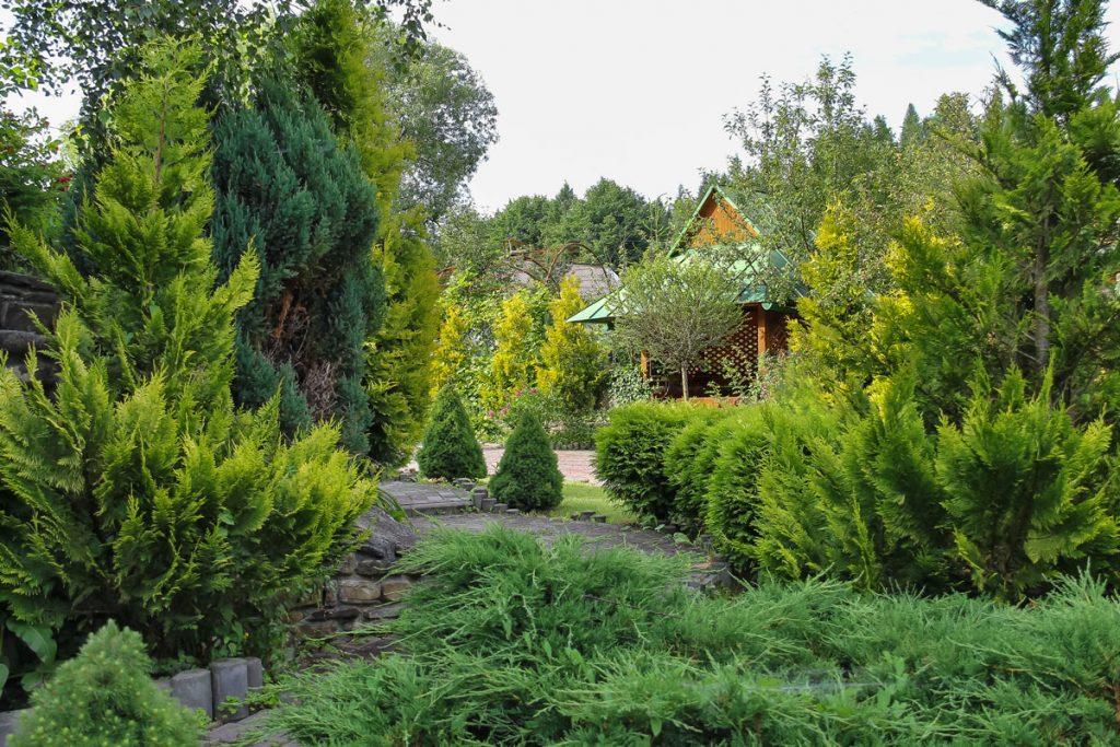 záhrada s ihličnatými stromami
