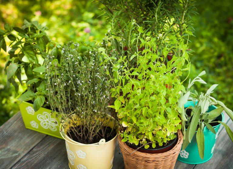 Zatočte so škodcami v záhrade. Vymeňte chémiu za bylinky
