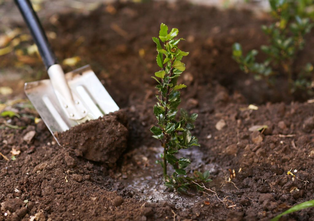 Okrasná záhrada v októbri: sadenie stromov