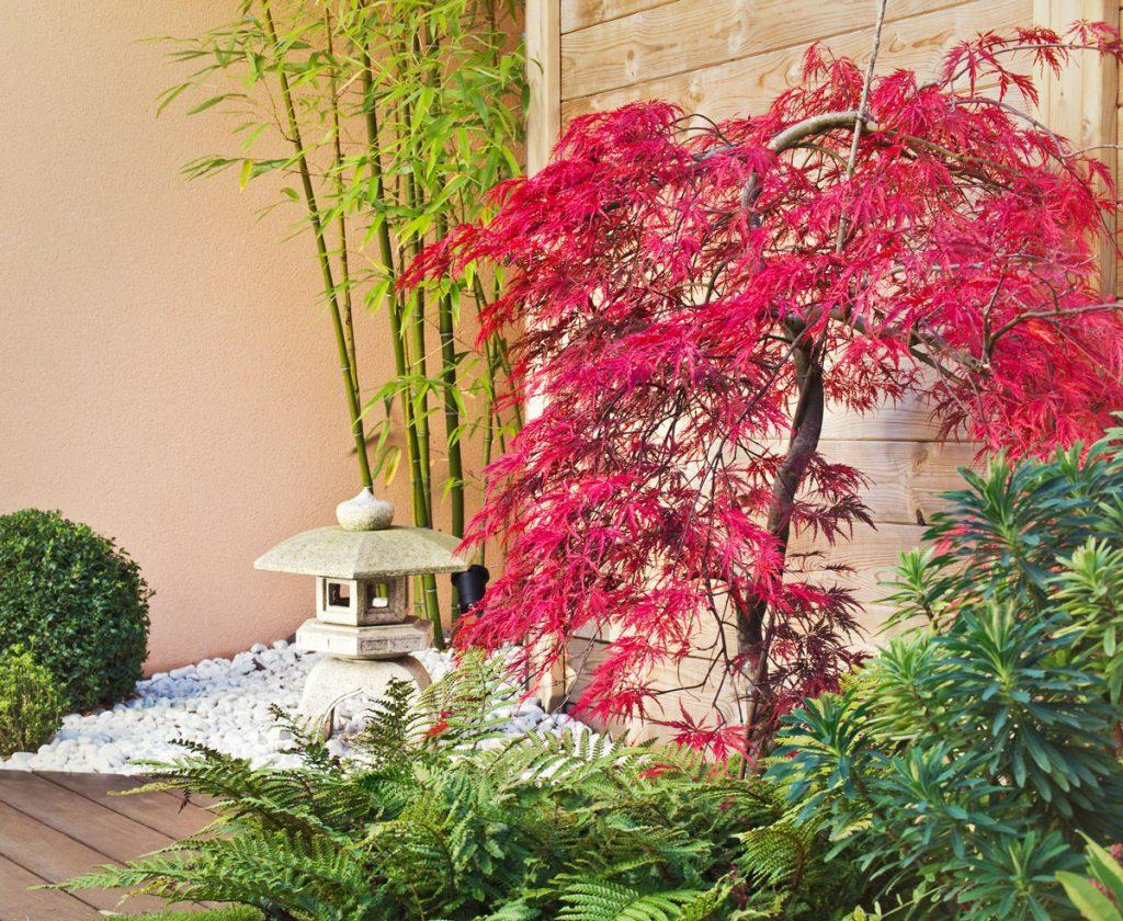 November v záhrade: presádzanie javorov