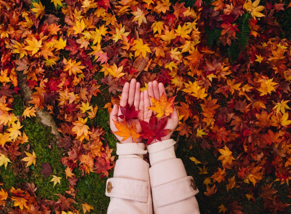 opadané jesenné listy