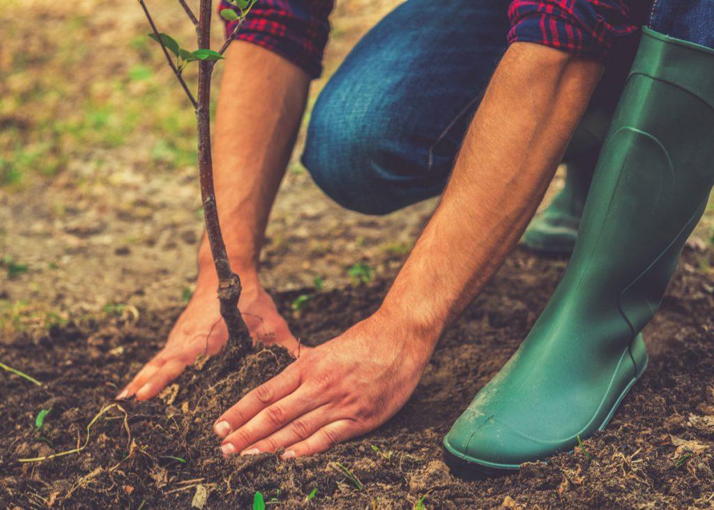 Veľký špeciál: Všetko, čo potrebujete vedieť o jesennom vysádzaní drevín