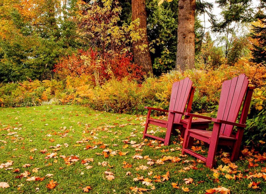 Zničený trávnik môžete obnoviť aj na jeseň