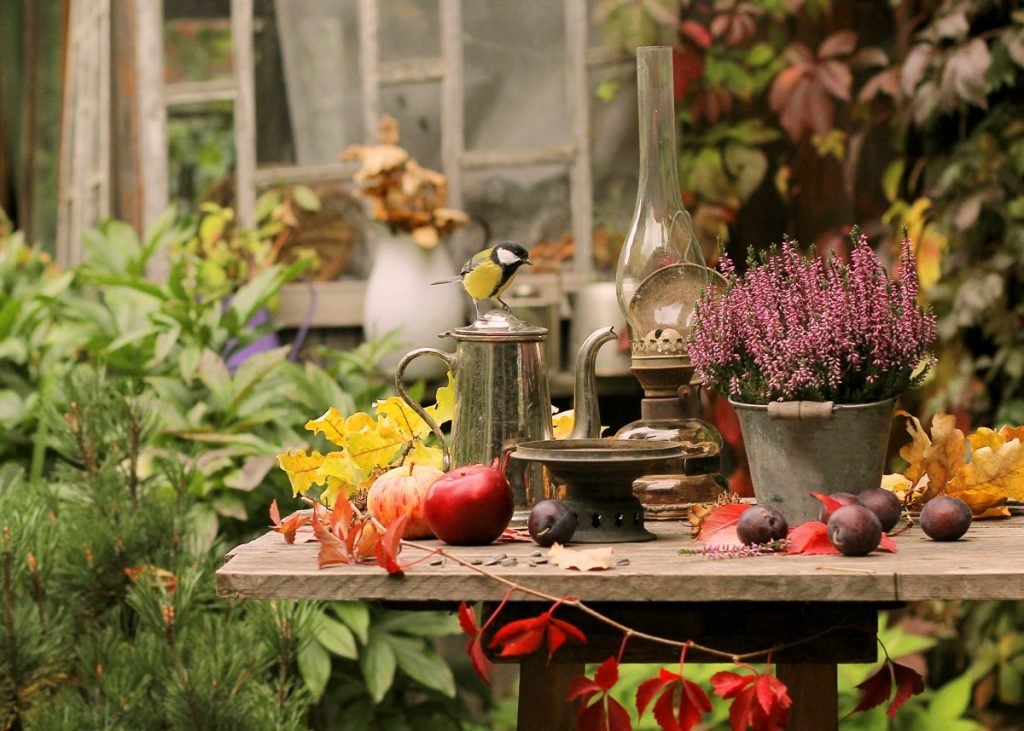 okrasná záhrada s dreveným stolom, na ktorom je vres, olejová lampa, čajník a ovocie