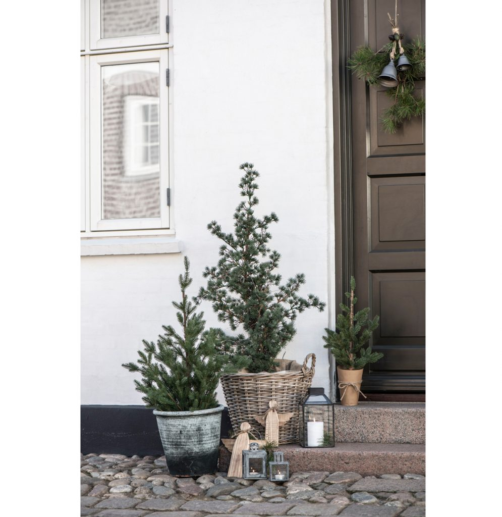 ihličnaté stromčeky v dekoratívnych nádobách umiestnené pred vchodom do domu