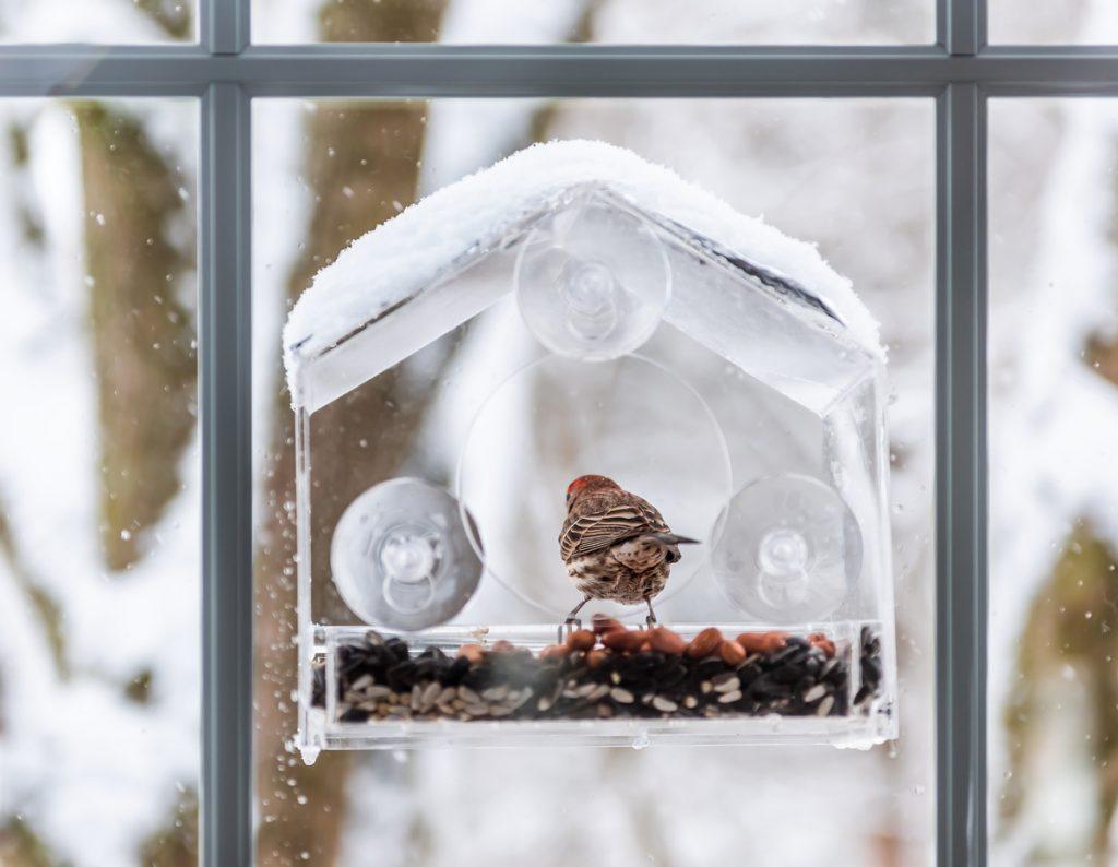 priesvitná vtáčia búdka pripevnená o okno pomocou prísaviek