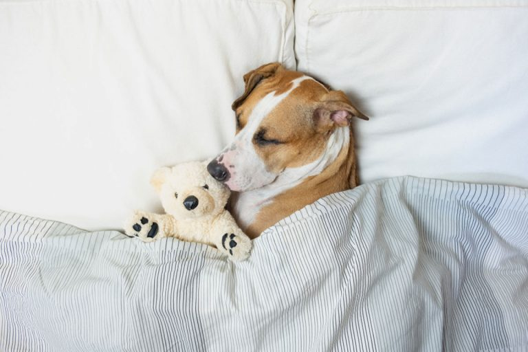 Vyspite sa doružova. Tieto tipy vám zabezpečia lepší a zdravší spánok