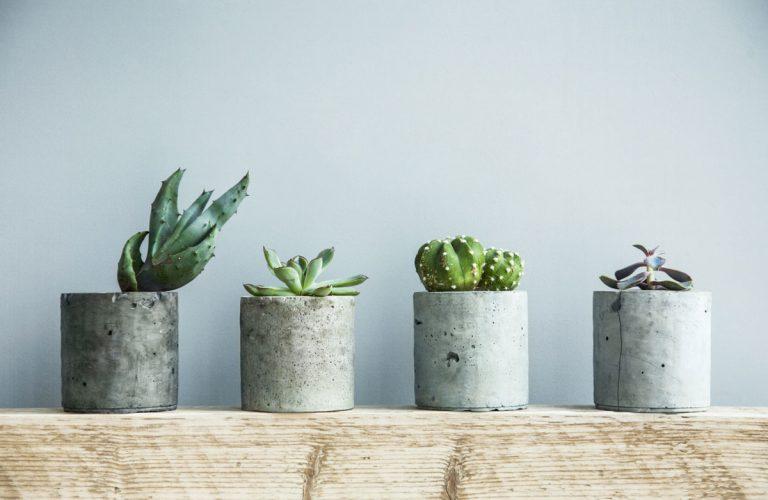 Ako na pestovanie a zazimovanie kaktusov