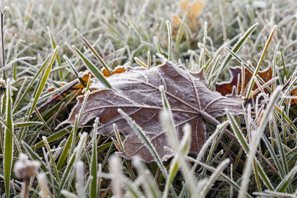 zamrznutý trávnik s napadaným lístím