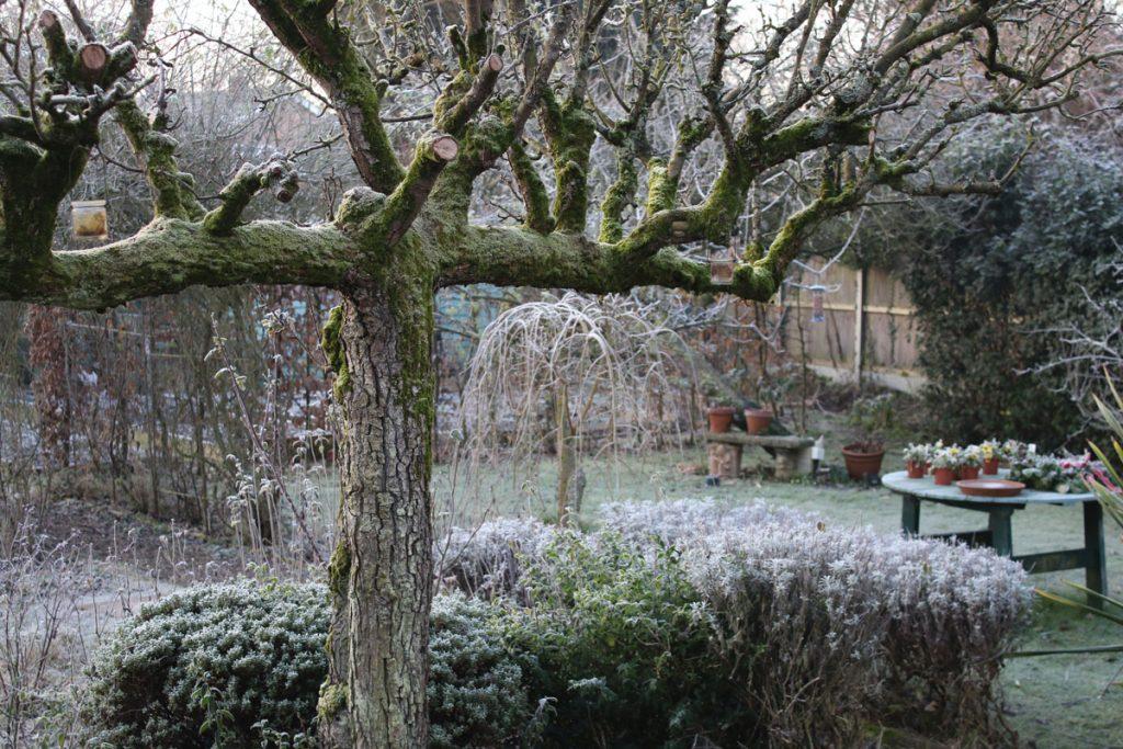 okrasná záhrada v decembri