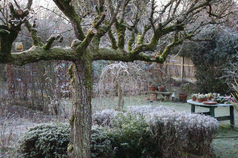 Starostlivosť o okrasnú záhradu nekončí ani v decembri. Na toto nezabudnite