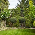 záhrada so živým plotom z tují, tvarovanými krušpánmi, s cypruštekmi a panašovaným brečtanom