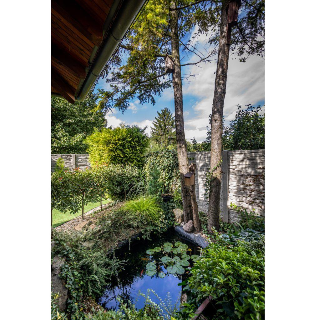 záhrada s jazierkom s leknami a japonskými kaprami, okrasnými drevinami a dvoma vysokými ihličnanmi