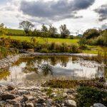 Jazierko v prírodnej záhrade vhodné aj na kúpanie, s plytko koreniacimi rastlinami, leknami a dreveným mólom.
