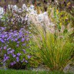 Prírodná záhrada s trvalkovými záhonmi, ktoré lákajú hmyz.