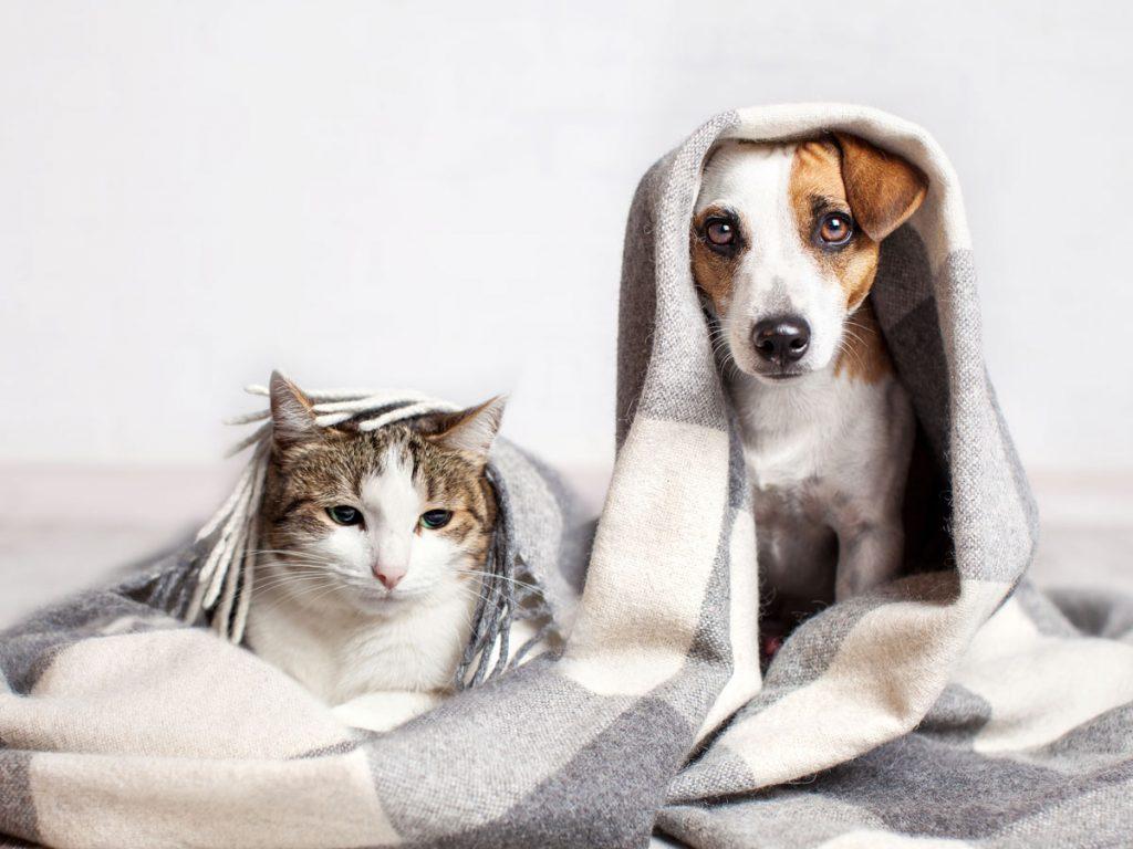štýlová výbava pre psa a mačku: pes s mačkou pod dekou