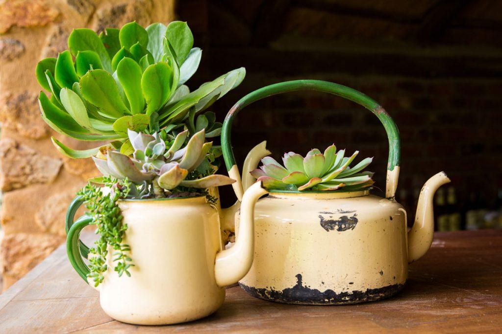 Prerábanie záhrady: zrecyklovanie starých čajníkov na nádoby pre sukulenty.